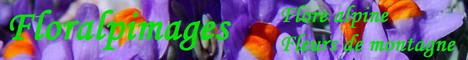 Floralpimages - Flore alpine, Flore arctique, Fleurs de montagne des Alpes et d'ailleurs